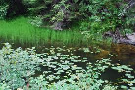 pond1
